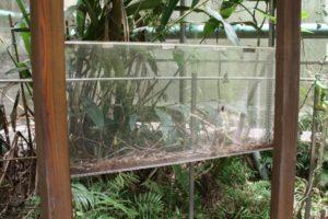 insectarium, types of vivarium