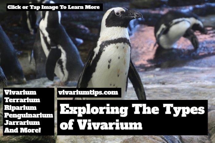 types of vivarium