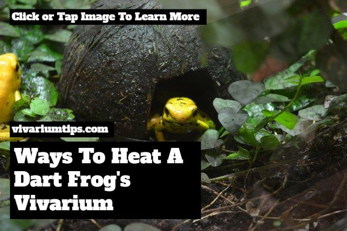 how to heat dart frog vivariums