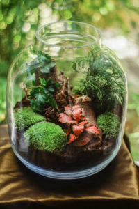the cost of terrarium