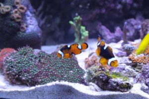 the cost of an aquarium