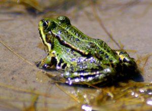 dart frogs vivarium