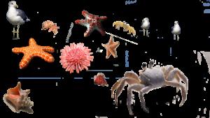 sea urchin, crab, starfish