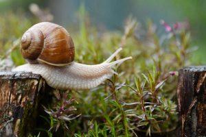 snail, garden, conch