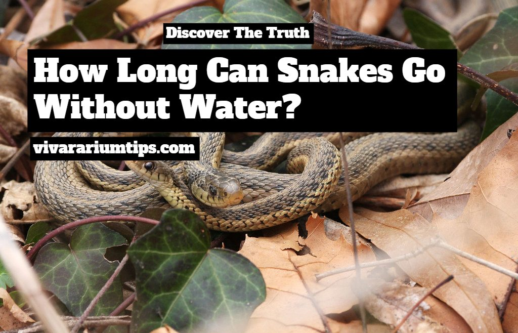 how long can snakes go without water