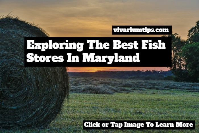fish stores in maryland