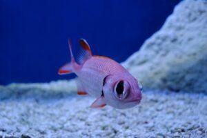 Are mini german ivy poisonous to aquariums