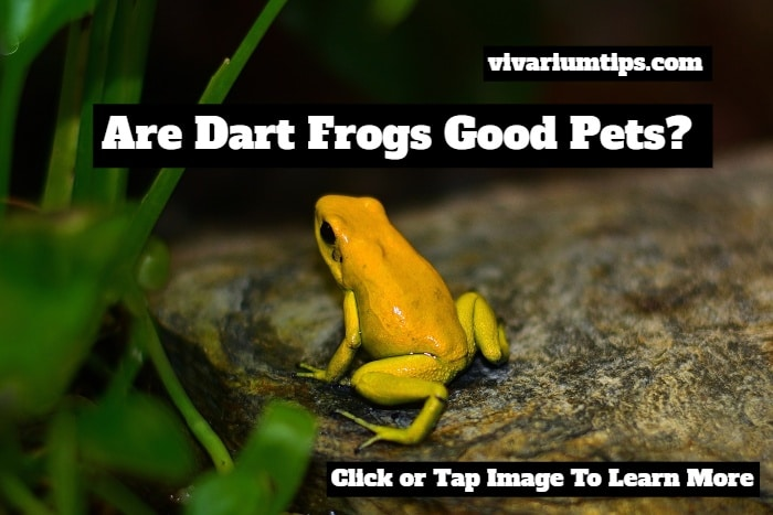 are dart frogs good pets