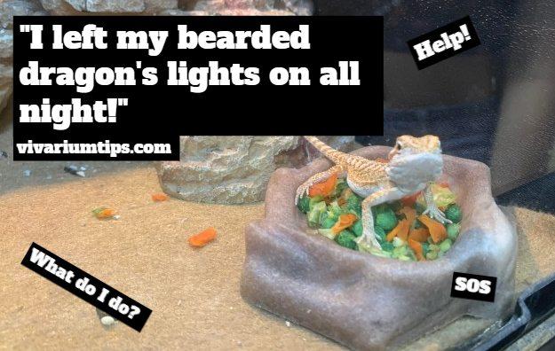 i left my bearded dragons lights on all night