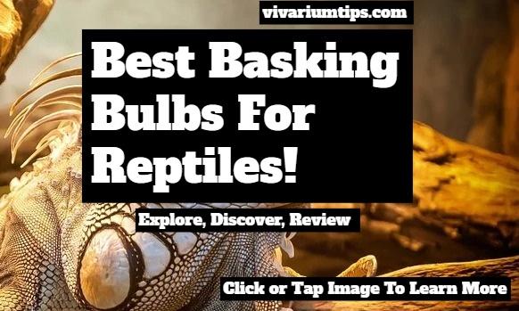 best basking bulbs for reptiles