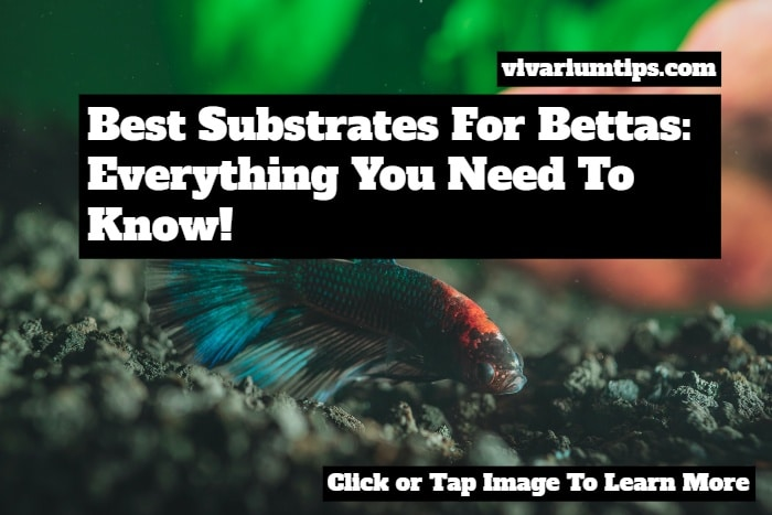 best substrates for bettas