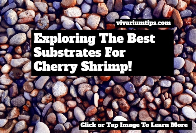best substrates for cherry shrimp