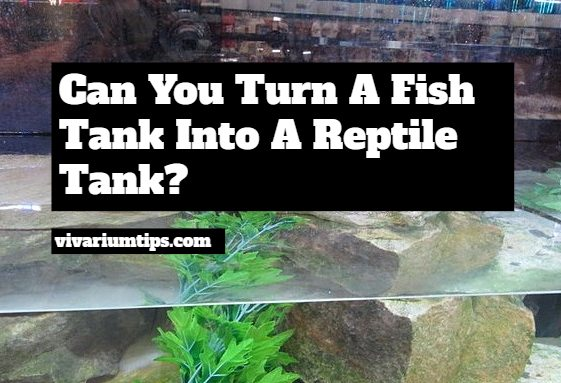 can you turn a fish tank into a reptile tank