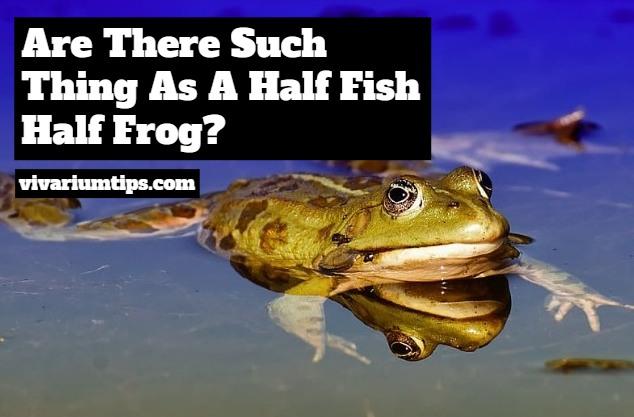 half fish half frog