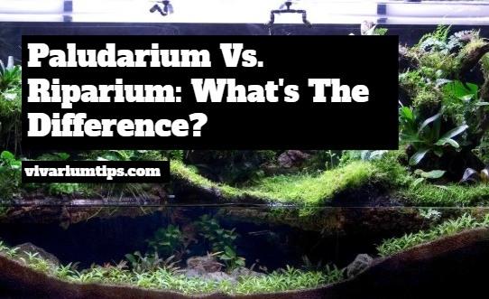 riparium vs paludarium