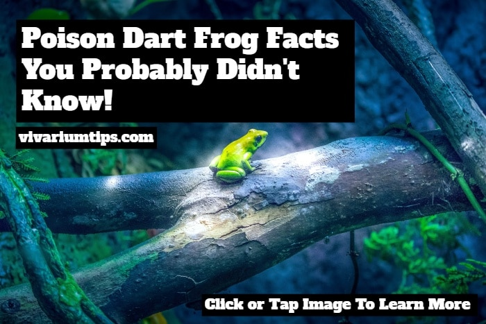 poison dart frog facts