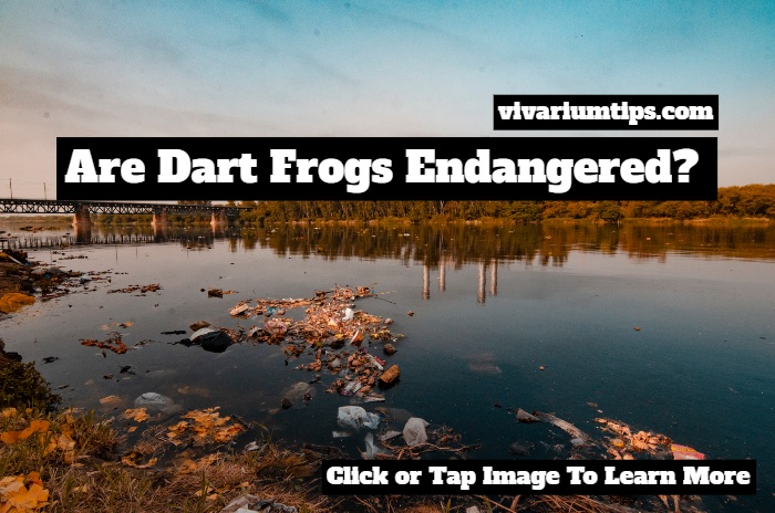 are dart frogs endangered