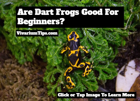are dart frogs good for beginners