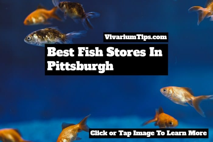 best fish stores in pittsburgh
