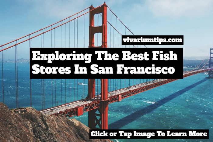best fish stores in san francisco