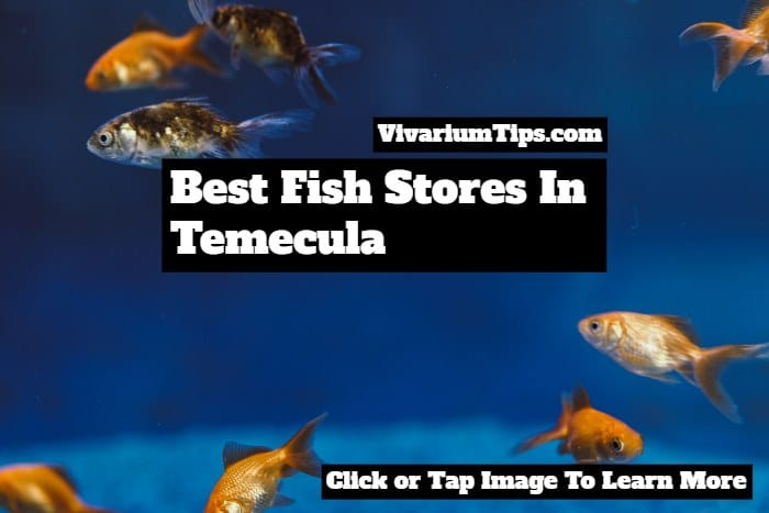 best fish stores in temecula