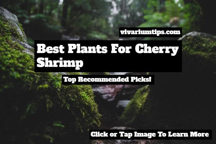 best plants for cherry shrimp