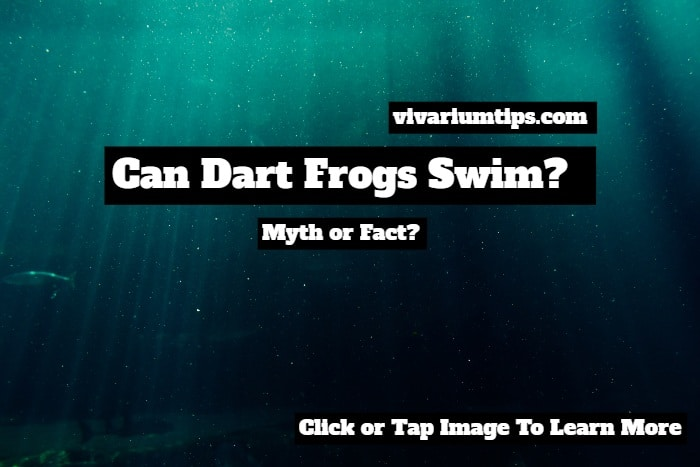 can dart frogs swim