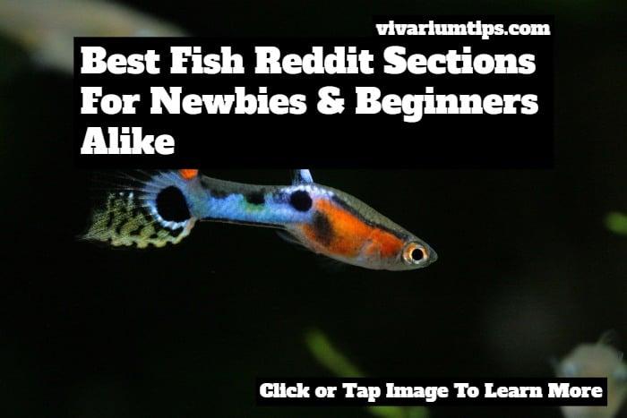 fish reddit
