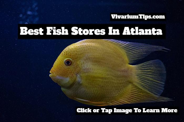 fish stores in atlanta