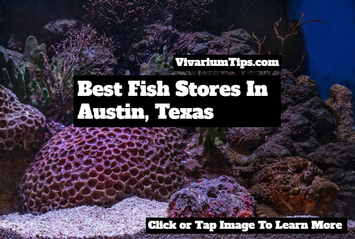 fish stores in austin