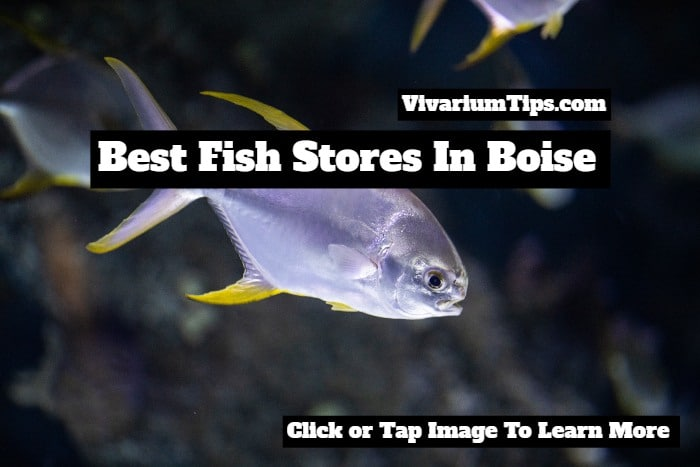 fish stores in boise