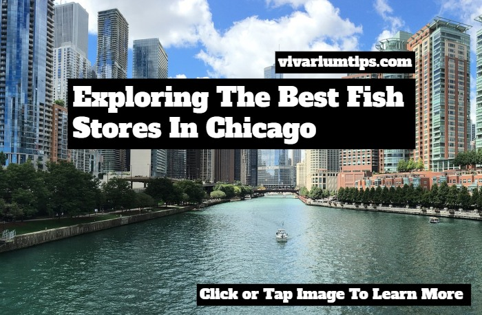 fish stores in chicago