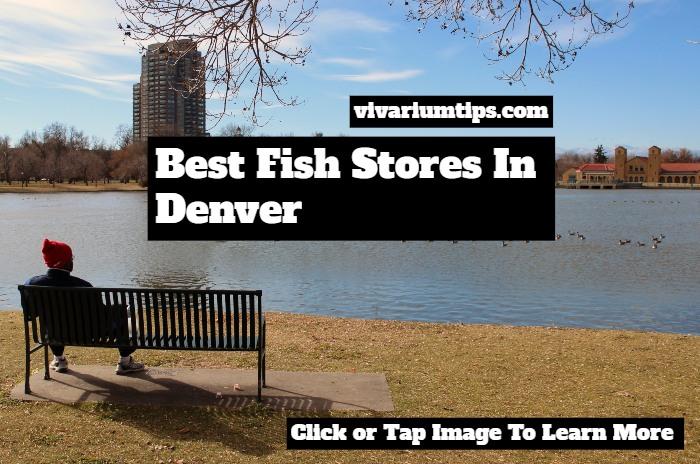 fish stores in denver