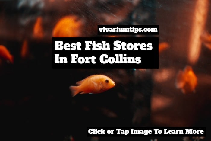fish stores in fort collins