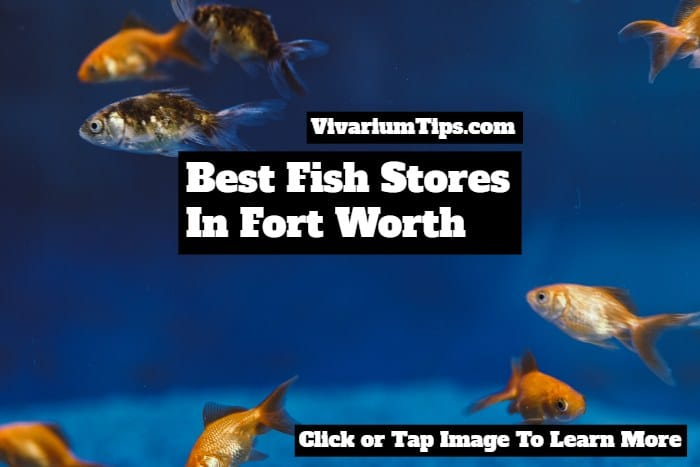 fish stores in fort worth texas