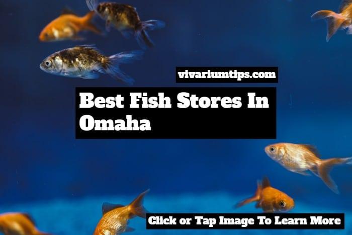 My 5 Favorite Best Fish Stores In Omaha In 2020 - VivariumTips