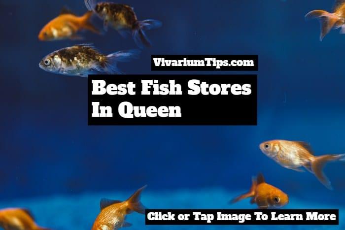 fish stores in queen