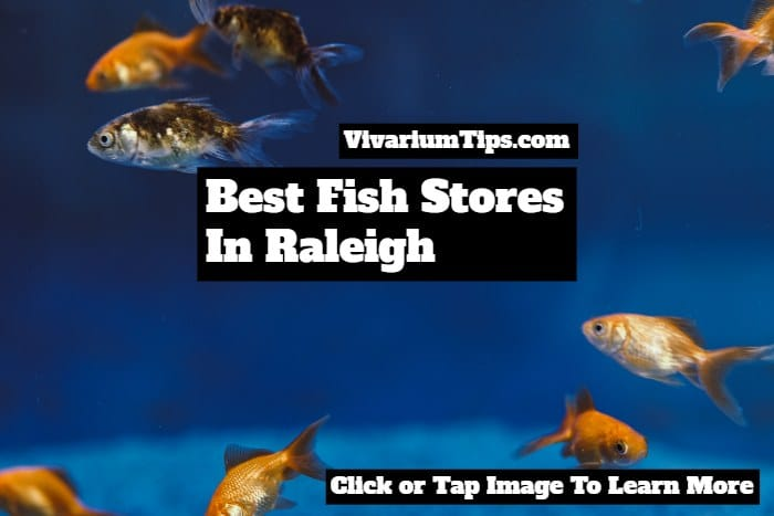 fish stores in raleigh