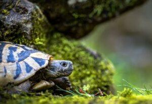 turtles as pets