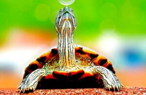 best turtle tanks