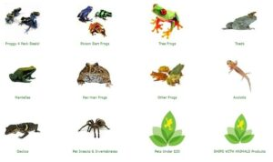 joshs frogs
