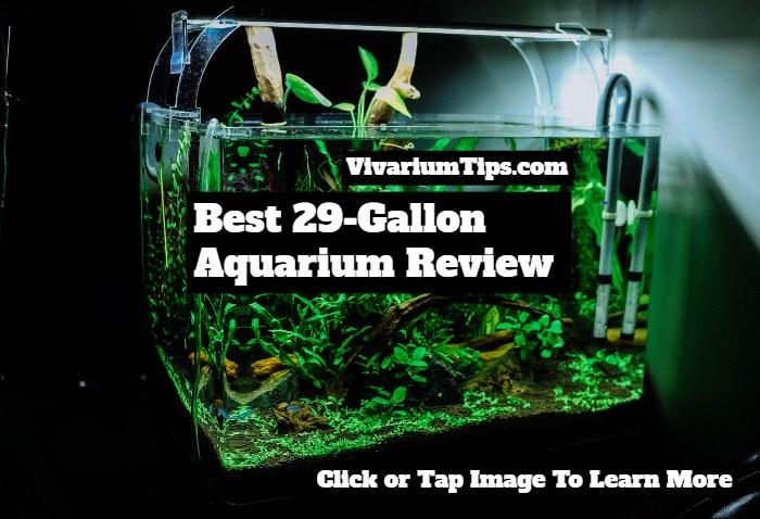 best 29 gallon aquarium