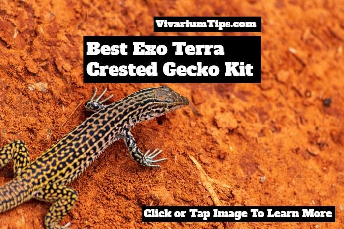 best exo terra crested gecko kit
