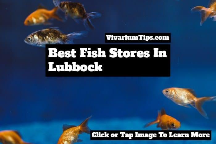 best fish stores in lubbock