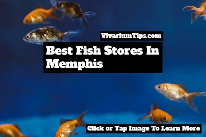 best fish stores in memphis