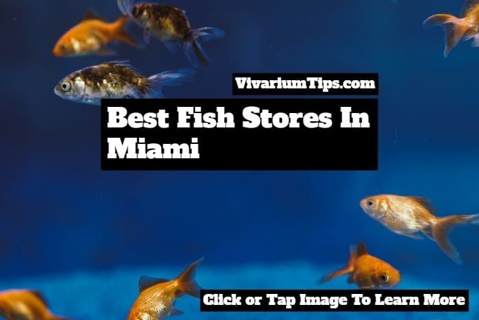 best fish stores in miami
