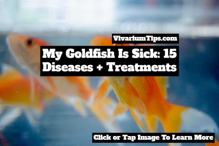 my goldfish is sick