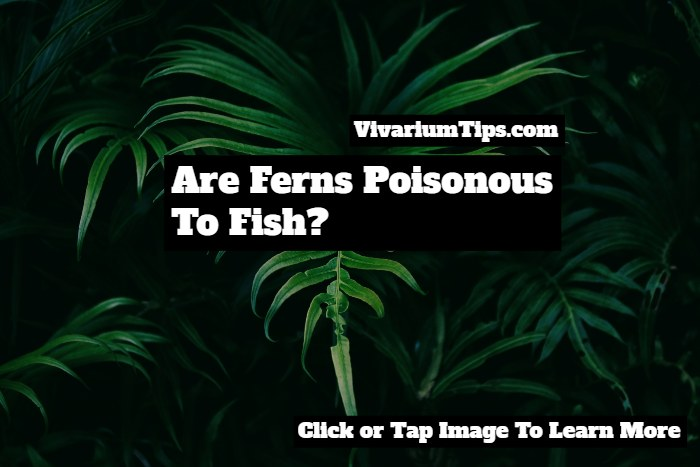 are ferns poisonous to fish