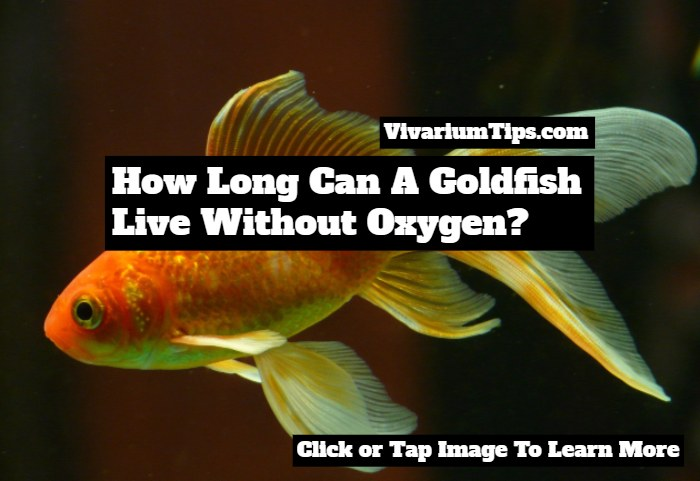 how long can a goldfish live without oxygen