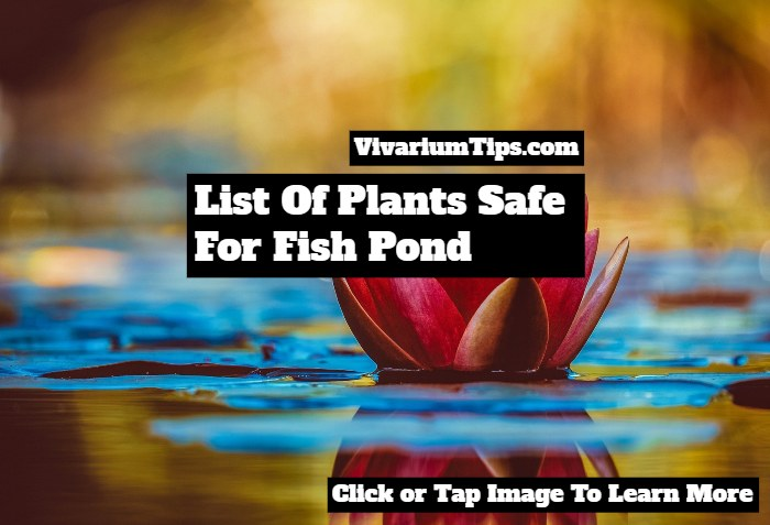 plants safe for fish pond